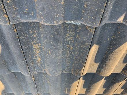 伊奈町 塗膜の劣化 コケの発生